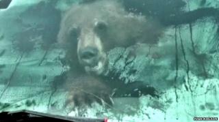 Medvjed mu ušao u kamionet, pogledajte što je učinio