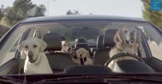 Duhovita reklama: Kako bi svijet izgledao da nas psi zamijene?