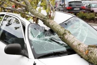Kako naplatiti štetu nastalu padom grane na privatnom parkiralištu tvrtke?